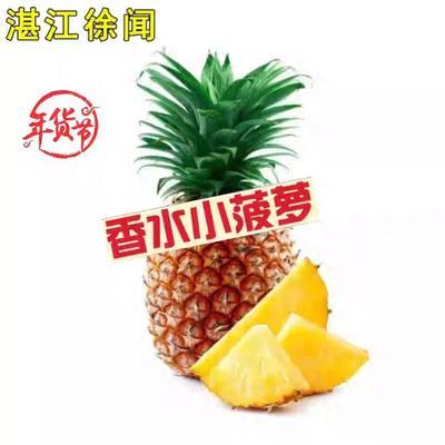 山东省泰安市肥城市徐闻菠萝 5斤以上