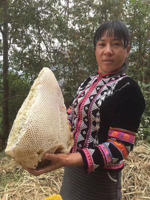 云南省玉溪市红塔区土蜂蜜 塑料瓶装 2年 100%