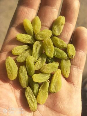 新疆维吾尔自治区吐鲁番地区鄯善县绿宝石葡萄干 一等