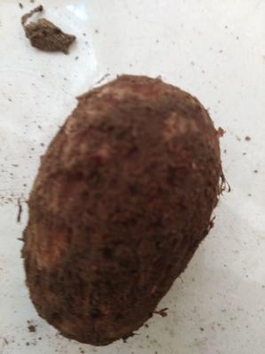 这是一张关于毛芋头 2cm以上 的产品图片