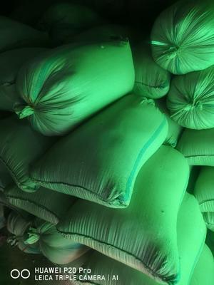 这是一张关于灰苏子  灰苏子的产品图片
