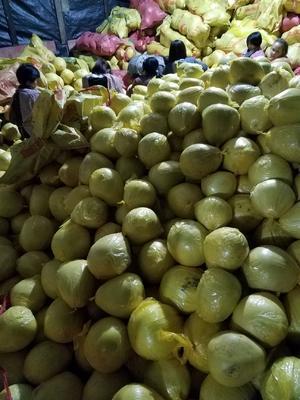 贵州省黔南布依族苗族自治州荔波县琯溪蜜柚 2.5斤以上