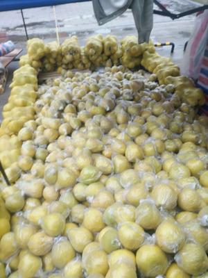 广东省广州市海珠区沙田柚 2.5斤以上