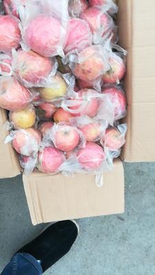 这是一张关于红富士苹果 75mm以下 片红 膜袋 的产品图片