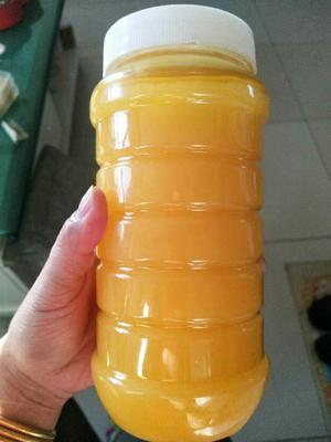 新疆维吾尔自治区阿勒泰地区阿勒泰市新疆罗布麻蜂蜜 塑料瓶装 1年 80%以上
