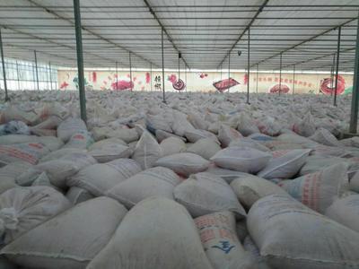 山西省忻州市忻府区带壳花生 带壳花生 干货