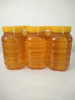 吉林省延边朝鲜族自治州和龙市椴树蜜 塑料瓶装 2年以上 95%以上