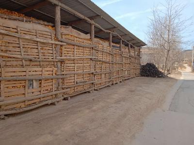 陕西省渭南市蒲城县玉米干粮 杂质很少 水份17%-20%