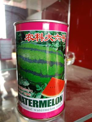 这是一张关于新机遇西瓜种子 二倍体杂交种 ≥90% 的产品图片