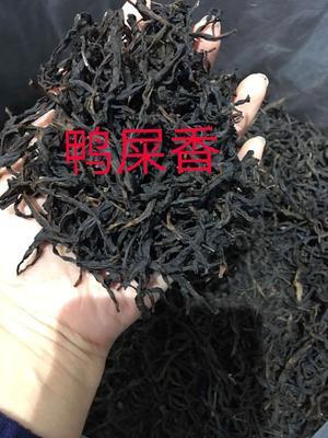 广东省潮州市湘桥区凤凰单丛 二级 散装