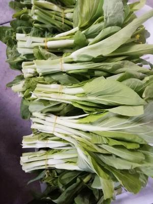 这是一张关于白菜苔 25~30cm 的产品图片