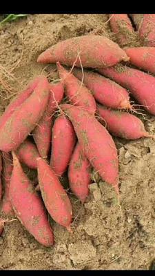 这是一张关于西瓜红红薯 3两~6两 红皮 的产品图片