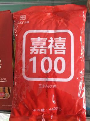河南省商丘市民权县嘉禧100 双交种 ≥97%