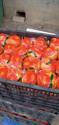 这是一张关于芦柑 统货 3两以上 的产品图片
