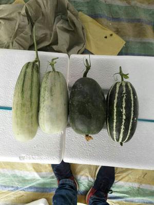 山东省聊城市莘县博洋9号甜瓜 0.5斤以上