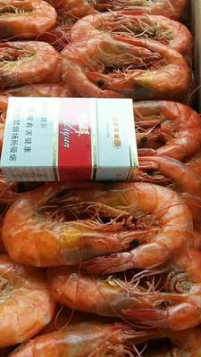 山东省滨州市沾化区南美对虾 野生 9钱以上