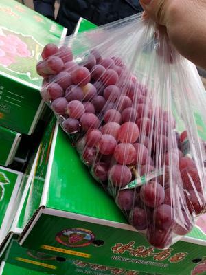 河北省石家庄市晋州市巨峰葡萄 1.5- 2斤 5%以下 1次果
