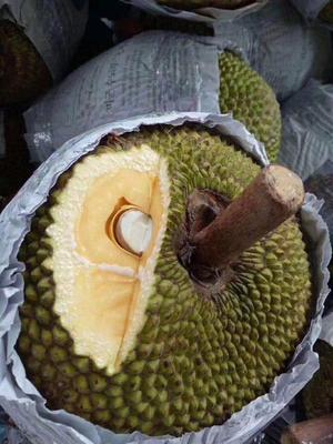 广西壮族自治区南宁市西乡塘区越南菠萝蜜 10-15斤