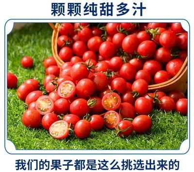 辽宁省盘锦市兴隆台区碧娇柿子 1 - 2两以上