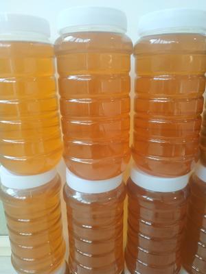 吉林省通化市集安市土蜂蜜 塑料瓶装 2年以上 98%