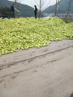 这是一张关于疙瘩榨菜 的产品图片