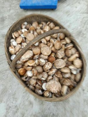 河南省南阳市西峡县剪柄香菇 袋装 1年以上