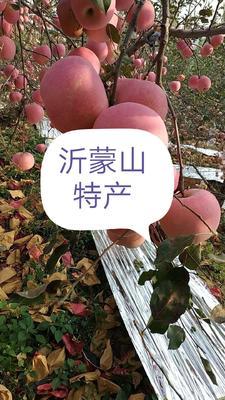 这是一张关于红富士苹果 75mm以上 全红 光果 的产品图片