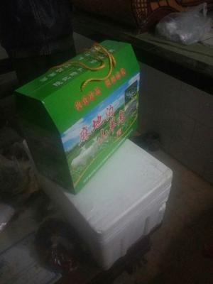 陕西省榆林市靖边县山羊 30-50斤