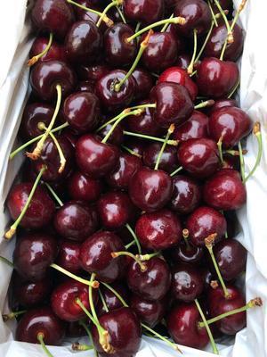 广东省广州市白云区甜樱桃  8-12g 30mm以上 澳洲甜心车厘子4斤装