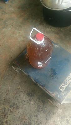 广西壮族自治区百色市右江区现榨山茶油