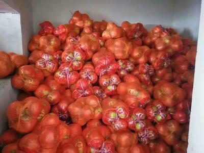 宁夏回族自治区石嘴山市平罗县红心柚 4斤以上