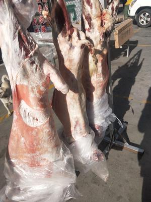 内蒙古自治区巴彦淖尔市临河区山羊 30-50斤
