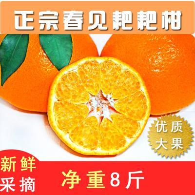 四川省成都市金牛区耙耙柑 7 - 7.5cm 3两以上
