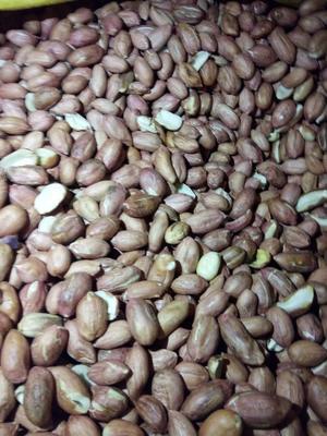 山东省日照市东港区白沙系列花生 花生米 干货