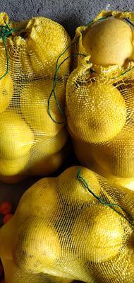 湖北省恩施土家族苗族自治州宣恩县白皮柚 1斤以上