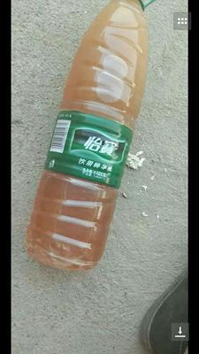 广西壮族自治区贵港市港北区土蜂蜜 散装 2年以上 95%以上