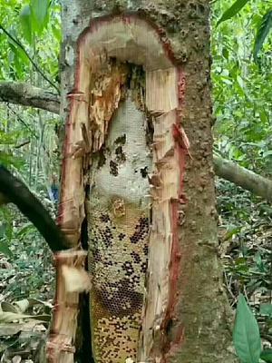 云南省红河哈尼族彝族自治州泸西县土蜂蜜 塑料瓶装 1年 95%以上