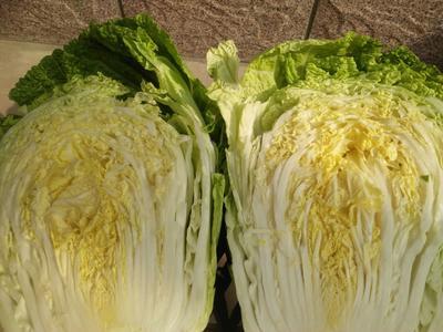 这是一张关于韩国黄心白菜 6~10斤 净菜 的产品图片