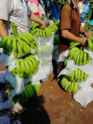 这是一张关于巴西香蕉 七成熟 的产品图片
