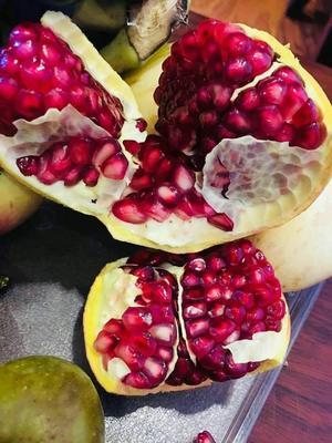 这是一张关于泰山大红石榴树苗 的产品图片