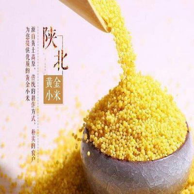 陕西省榆林市榆阳区普通黄米  一级 陕北革命根据地小米