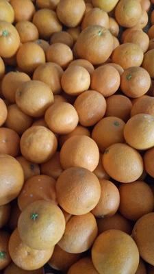 重庆开县锦橙脐橙 6 - 6.5cm 3两以上
