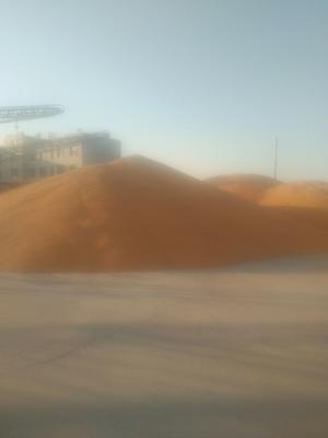 黑龙江省哈尔滨市双城市玉米干粮 净货 水份14%-16%