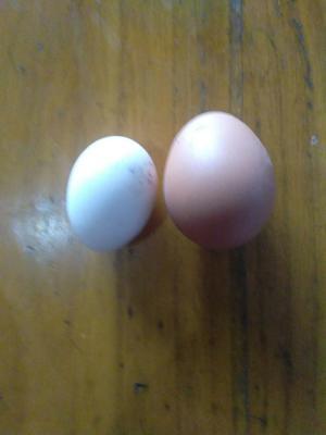 山东省临沂市蒙阴县草鸡蛋  食用 箱装 来自山旮旯的草鸡蛋