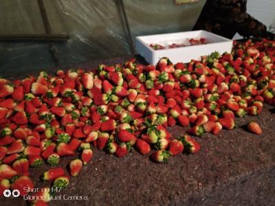 这是一张关于九香草莓 30克以上 的产品图片