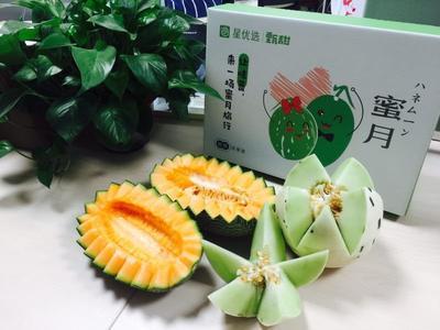 海南省海口市琼山区流星雨甜瓜 2斤以上