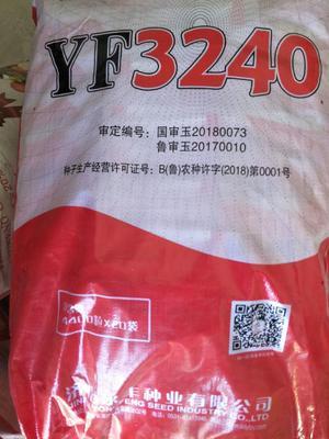河南省商丘市民权县永丰3240 双交种 ≥90%