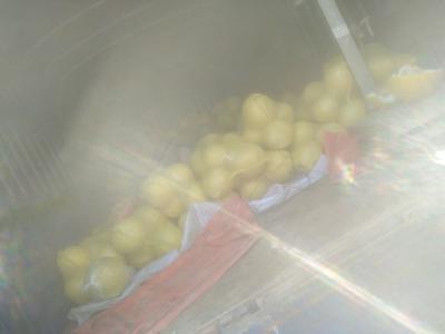 广西壮族自治区贺州市八步区红心柚 2斤以上