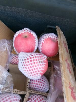 甘肃省平凉市静宁县静宁苹果 70mm以上 统货 纸袋