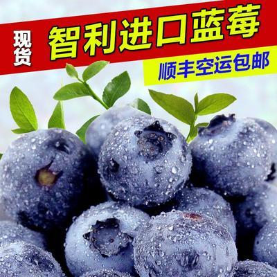 山东省临沂市罗庄区智利蓝莓 15mm以上 鲜果